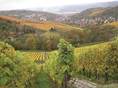 Stuttgart is one of the largest wine-growing areas in Germany.